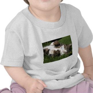 supe cute kitty shirts