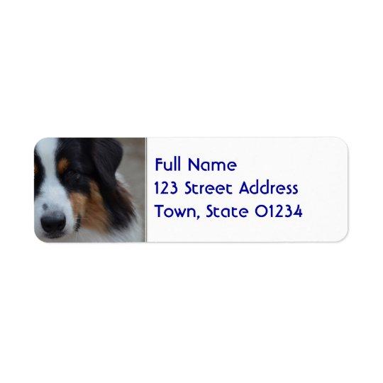 Super Cute Australian Shepherd Return Address Label