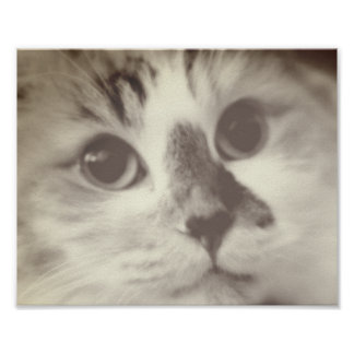 SUPER CUTE Cat Closeup Portrait Photograph Poster