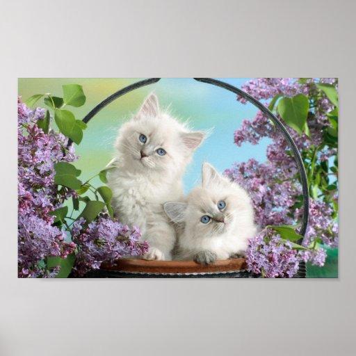 Super cute cat poster