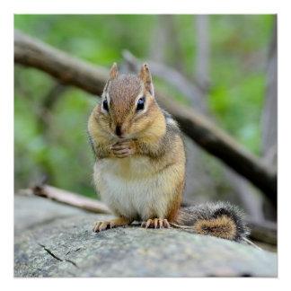 Super Cute Chipmunk Posing Sweetly