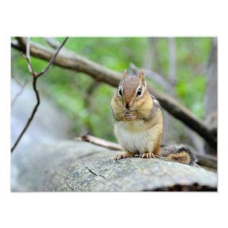 Super Cute Chipmunk Posing Sweetly Photograph