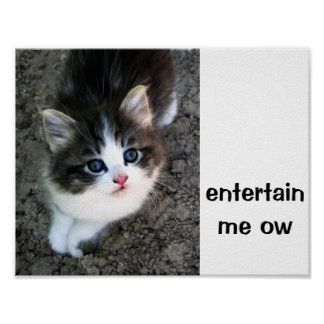 SUPER CUTE Kitten Customizable Poster