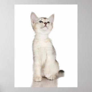 Super Cute Kitten Customizable Print