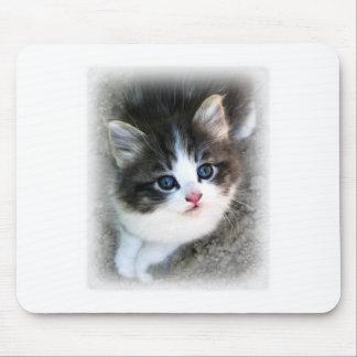 SUPER CUTE Kitten Portrait Photograph Mouse Pad