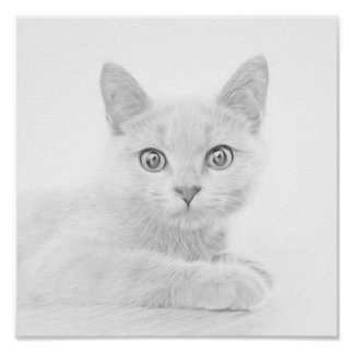 SUPER CUTE Kitten Portrait Photograph Poster