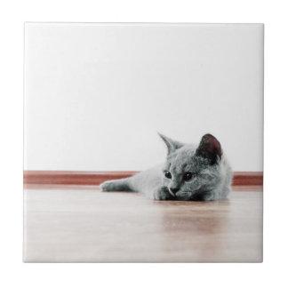 SUPER CUTE Kitten Portrait Photograph Tile