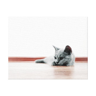 SUPER CUTE Kitten Portrait - Scottish Fold Cat Canvas Print