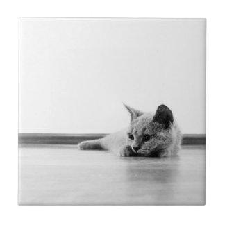 Super Cute Scottish Fold Kitten Cat Tile