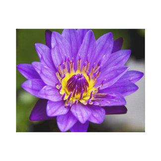 Peace Lily Flower Art, Posters & Framed Artwork | Zazzle.co.uk