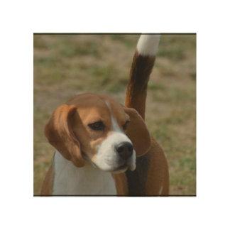 Super Sweet Beagle Wood Prints