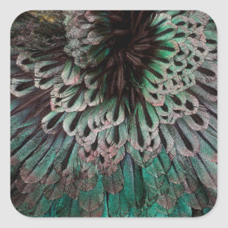 Superb Bird Of Paradise Feather Abstract Square Sticker