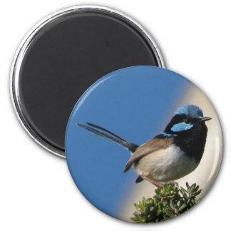 Superb Fairy wren 6 Cm Round Magnet
