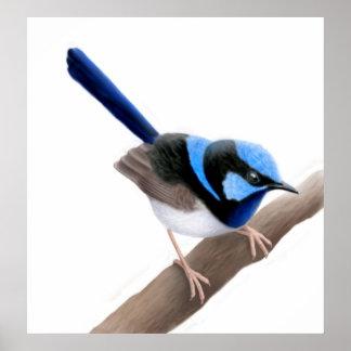 Superb Fairy Wren Bird Print