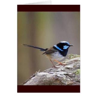 Superb Fairy-wren Card
