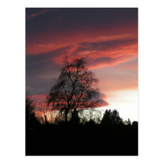 Superbowl Sunset Postcard