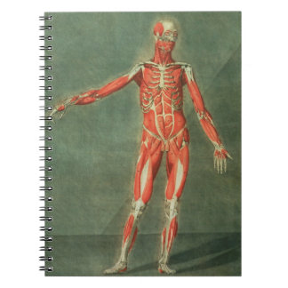 Superficial Muscular System of the Front of the Bo Notebooks