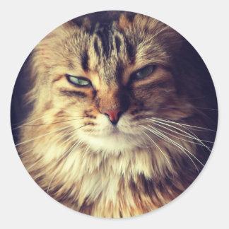 Superior cat round sticker