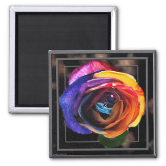 Surfing the Rainbow Rose Magnet