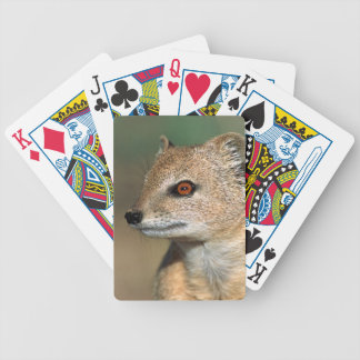 Suricate (Suricata Suricatta) Peering Bicycle Playing Cards
