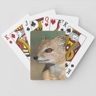 Suricate (Suricata Suricatta) Peering Poker Deck