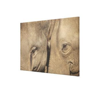 Surin Elephant Round Up, Surin Elephant Show Canvas Print