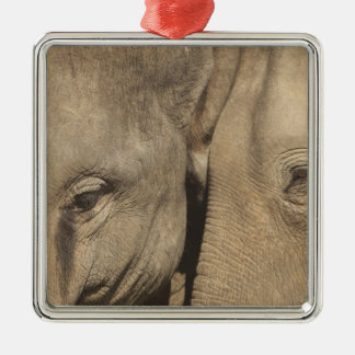 Surin Elephant Round Up, Surin Elephant Show Silver-Colored Square Decoration