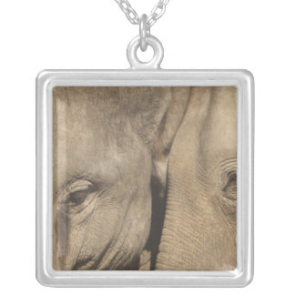 Surin Elephant Round Up, Surin Elephant Show Silver Plated Necklace