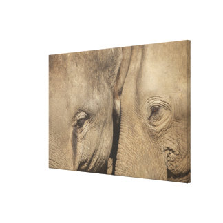 Surin Elephant Round Up, Surin Elephant Show Stretched Canvas Prints