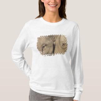 Surin Elephant Round Up, Surin Elephant Show T-Shirt