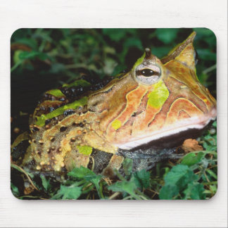 Surinam Horn Frog, Ceratophrys cornuta, Native Mouse Mat
