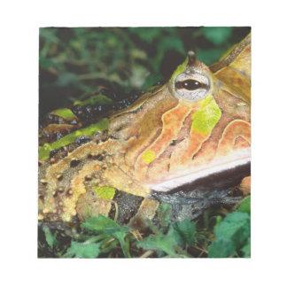 Surinam Horn Frog, Ceratophrys cornuta, Native Notepad