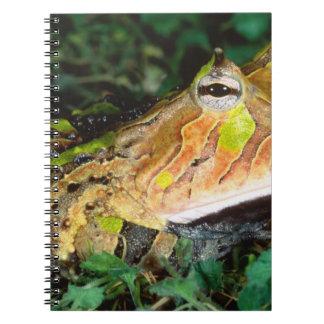 Surinam Horn Frog, Ceratophrys cornuta, Native Spiral Notebook