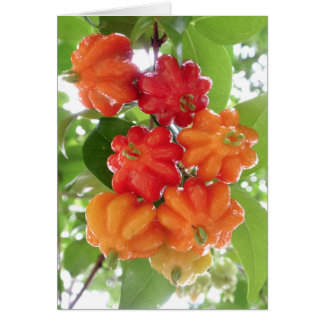 Suriname Cherries Card
