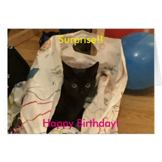 Surprise Cat In Bag Picture Card