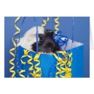 Surprise Guinea Pig Greeting Card