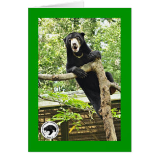 Surprised Sun Bear Card