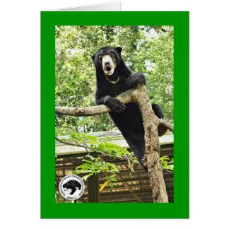 Surprised Sun Bear Greeting Card