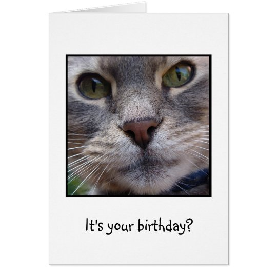 Surprized Cat, It's your birthday? Card