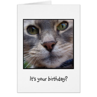Surprized Cat, It's your birthday? Greeting Card