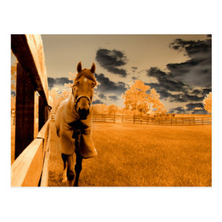 surreal horse walking down fence orange sky post card
