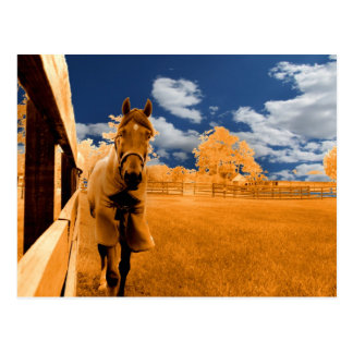 surreal horse walking fence orange blue sky post card