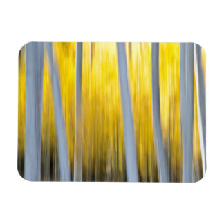 surrounded by Aspen trees Magnet