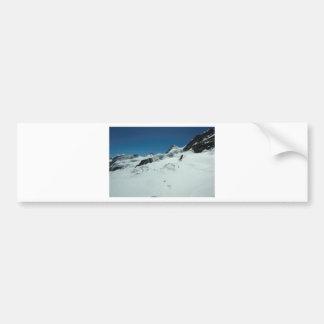 Surviving the cold season bumper sticker