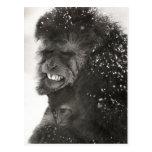Surviving the winter, monkey family postcard