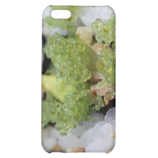 sushi california roll iPhone 5C cover