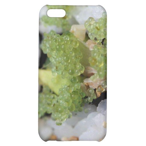 sushi california roll iPhone 5C cover