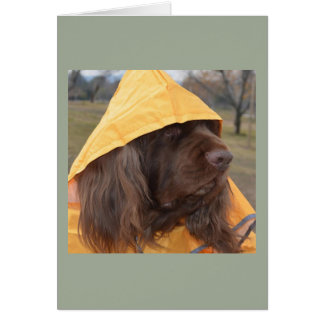 Sussex Spaniel waiting for the rain Card