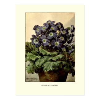 Suttons' blue primula post card