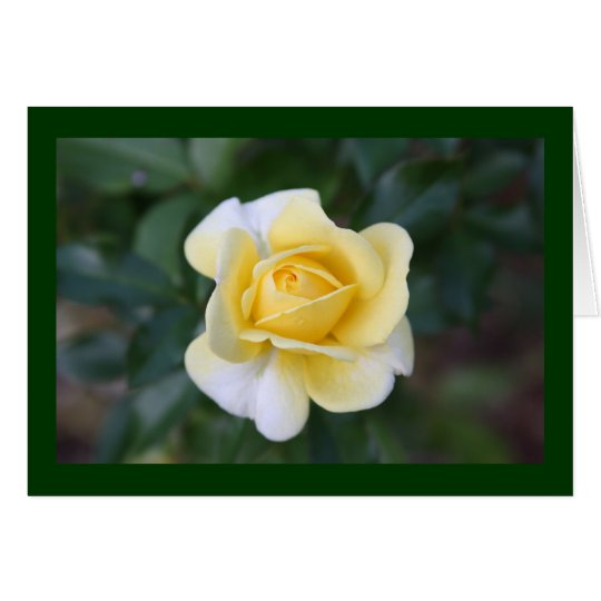 Suzanne's yellow rose card